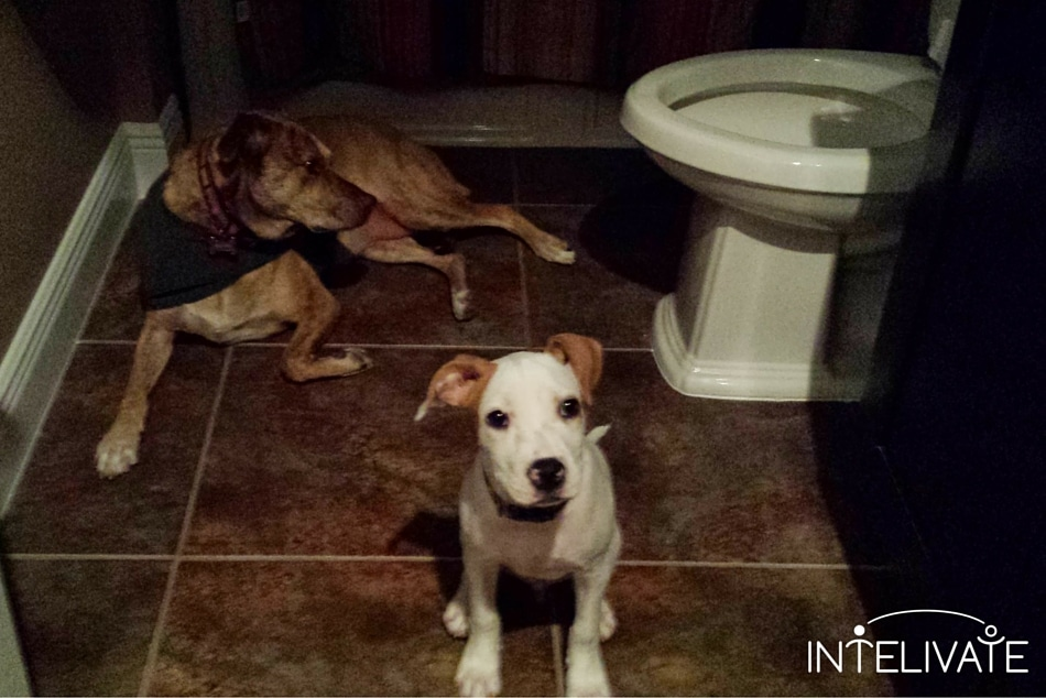 Life and Effective Leadership lessons Taught By Rescued Dogs Kris Fannin Intelivate